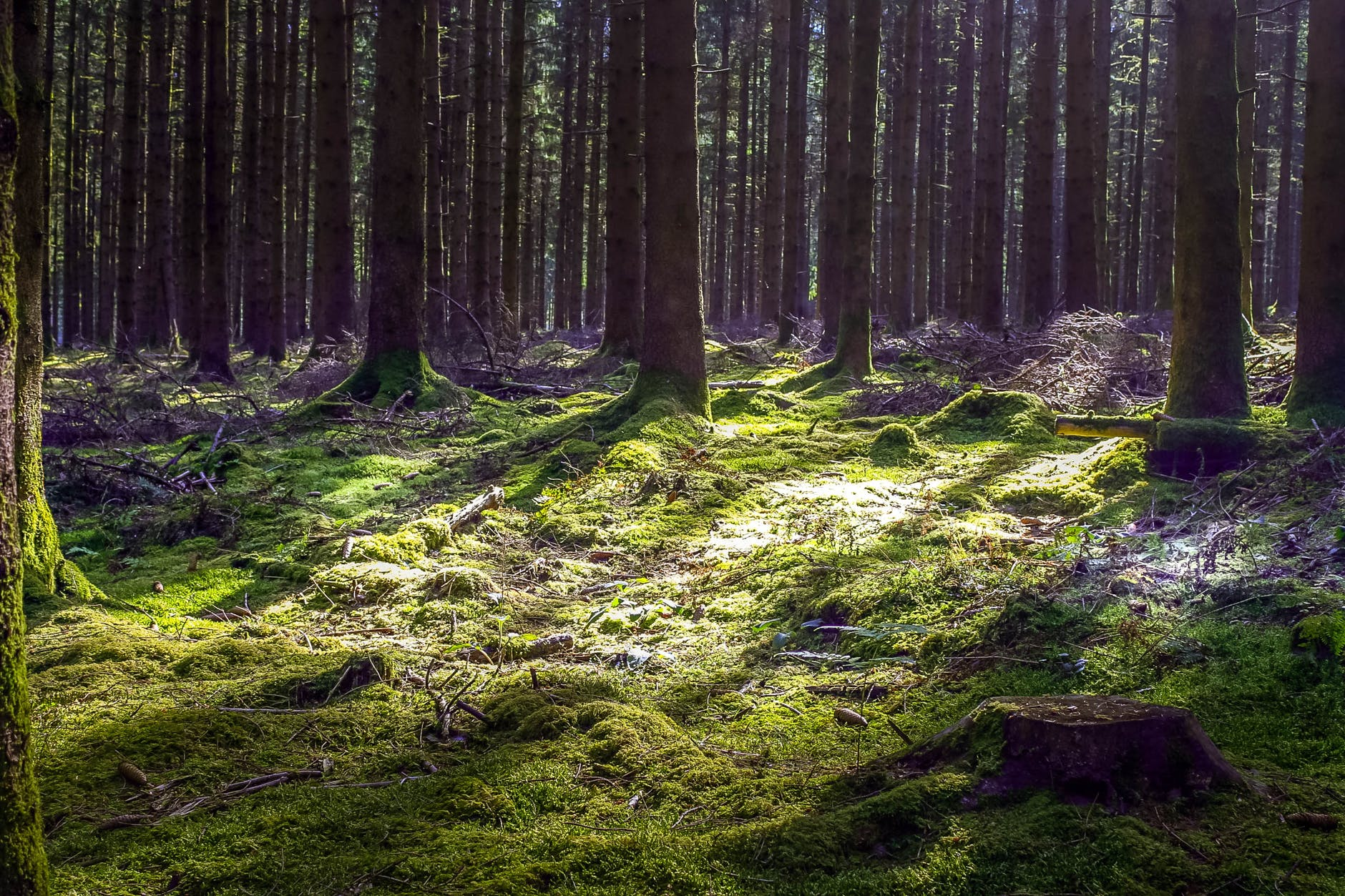 wood light dawn landscape